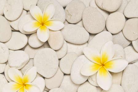 Stock photo of three frangipani flowers on white pebbles.
