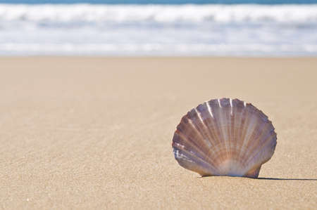 Close-up of a scallop shell in the sand, With crashing waves in the background. Stock Photo