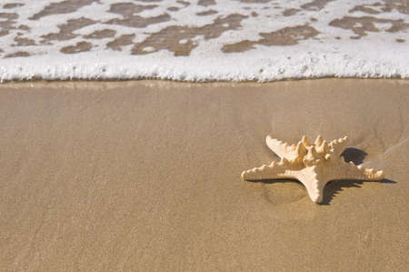 A starfish on wet sand by the sea. Stock Photo