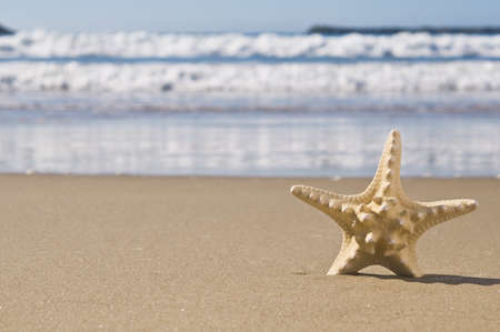 Starfish in the sand by the sea, On a beautiful sunny day.