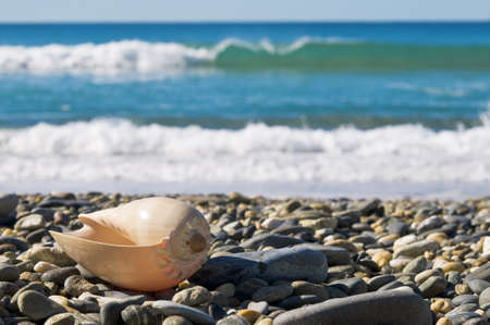 Large sea shell on rocky beach by the waves.