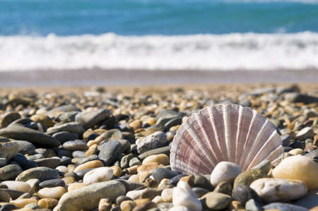 waters  edge: close up of shell on stones by the waters edge. Stock Photo