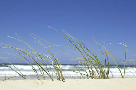 Beach grass in the sand by the ocean on a bright sunny day  Stock Photo