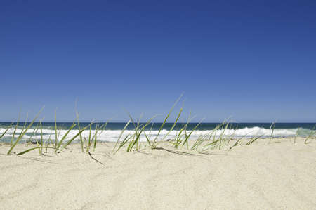 Beach grass in the sand by the ocean on a bright sunny day, with the surf in the background