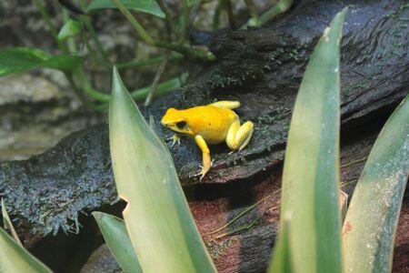 poison frog: poison frog