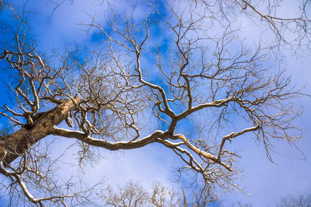 convoluted: Meandering tree branch on sky background