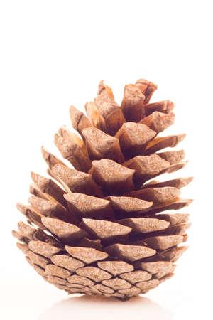 Pinecone isolated on white background