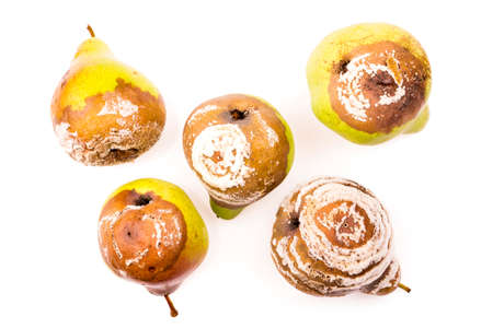 tainted: Group of rotten pears studio isolated
