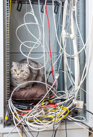 Cat on pillow in network cabinet on a bunch of wires