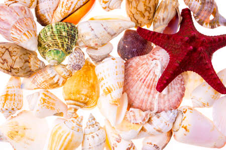 Background of various colorful seashells Zdjęcie Seryjne - 65992254