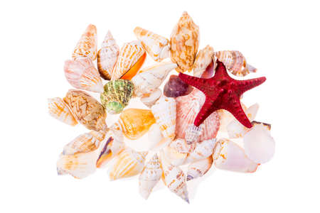 Collection of various colorful seashells isolated on white