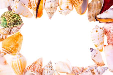 Frame of seashells isolated on white