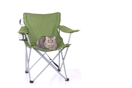 Cat sitting on tourist portable armchair isolated on white