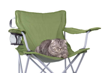 Cat sleeping on tourist portable armchair isolated on white