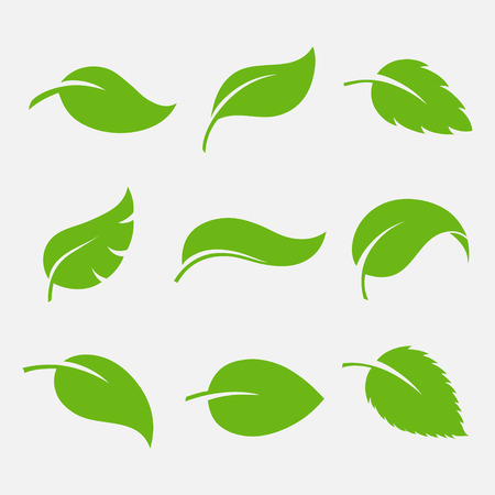 Leaves icon set isolated on white background. Various shapes of green leaves of trees and plants.