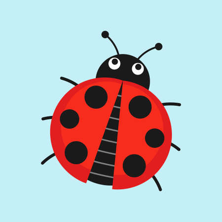 lady in red: Cute Ladybug vector illustration in flat style. Cartoon beetle ladybug isolated from the background.