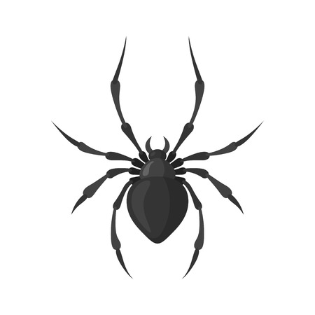 poison fang: Spider vector illustration in a flat style. A poisonous and dangerous arthropodic insect. Cartoon black scary spider. Illustration