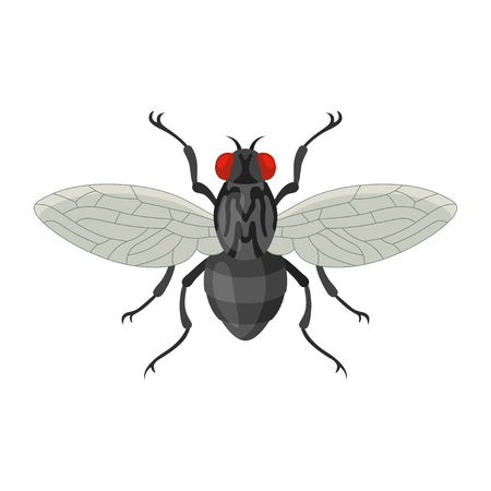 hum: Home fly vector illustration in cartoon style.  Icon of insect black fly isolated on white background. Annoying, buzzing insect, vector of infection.