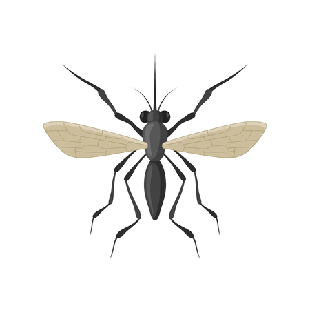 anopheles: Mosquito icon isolated on white background. A stinging, biting, annoying insect. Cartoon black mosquito insect view from above.