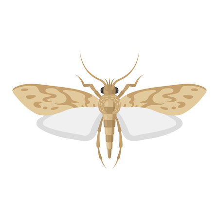 Moth bug vector illustration on white background. Top view of an insect pest of a butterfly moth. Illustration