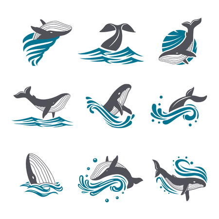 diving save: Whale among sea waves and splashes vector icon set. Illustration of a diving and floating whale in the blue sea. Marine mammal icon on white background. Illustration