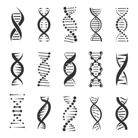 ADN hélice, un signo genético iconos vectoriales sobre un fondo blanco. Elementos de diseño para la medicina moderna, la biología y la ciencia. Símbolos oscuros de la molécula de ADN de doble cadena humana.