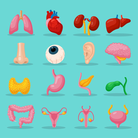 Human body organs. Set of organ systems to keep the human body functioning well, useful visual aid for medical settings. Stock Illustratie