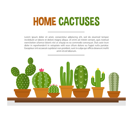 Home cactuses mockup. Succulent plants in a line with a thick fleshy stem and spines. Vector flat style cartoon illustration isolated on white background 向量圖像