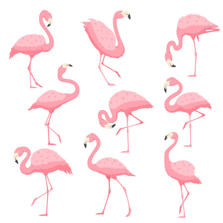 Pink flamingo in different poses vector cartoon illustration. Tropical bird flamingo isolated on white background.