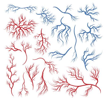 Human veins and arteries Illusztráció