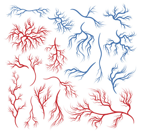 Human veins and arteries Illustration