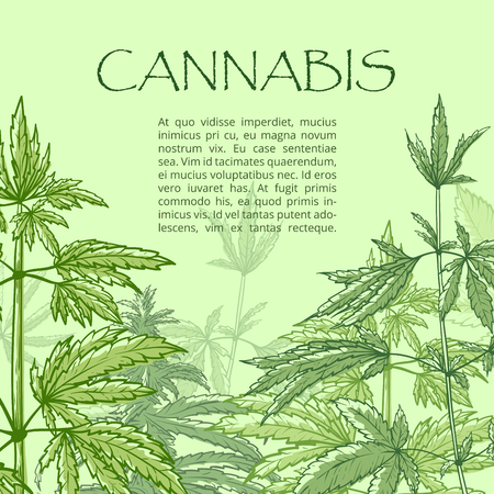 Cannabis hand draw poster