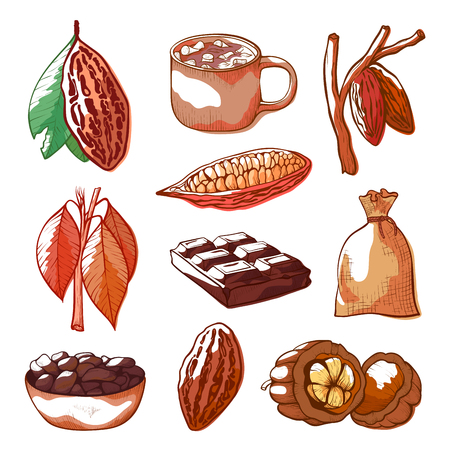 Cocoa beans hand drawn vector set isolated from background. Colorful illustrations collection of beans, pods, chocolate bar, powder in pouch, branches with leaves, cacao drink with marshmallow