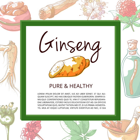 Ginseng hand drawn banner. Plant tuber with various tonic and medicinal properties, poster with copy space. Vector illustration Ilustração