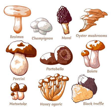 Edible mushrooms hand drawn. Fit to be eaten natural items of food for cooking, healthy forest nutrition. Vector illustration