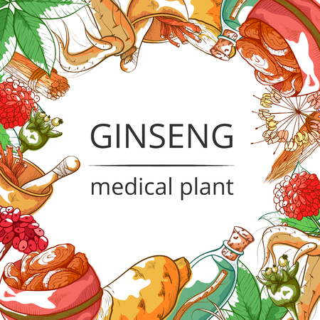 Ginseng medical plant frame background. Root and herb used as pharmaceutical drug, poster for health store. Vector flat style cartoon illustration isolated on white background Ilustracja