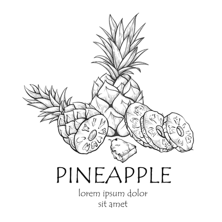 Pineapple fruit banner, sketch with copy space. Large juicy tropical fruit sketch. Vector line art illustration on white background