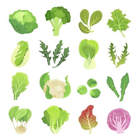 Conjunto de hortalizas de hoja, agricultura y planta verde. Dieta natural y producto vegano. Ilustración de dibujos animados de estilo plano de vector aislado sobre fondo blanco