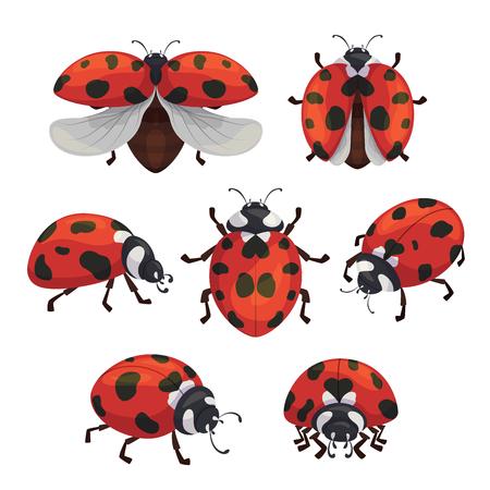 Zestaw biedronki owadów, słodkie małe czerwone pluskwy