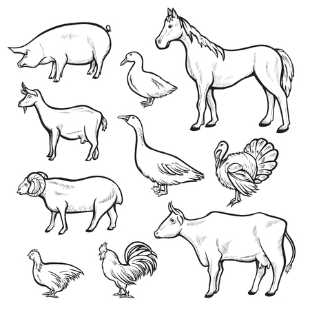 Farm animal drawing set, domestic and agriculture symbol. Animals are raised on a farm pigs, chickens. Vector line art illustration Ilustração