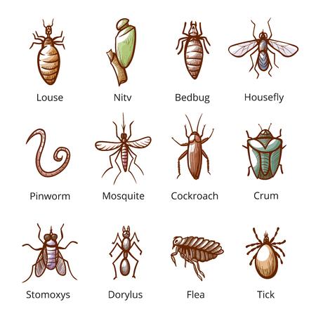 Insektenparasitenset mit Namen, gefährliche Schädlinge. Organismus, der in oder von einem größeren Tier lebt und sich davon ernährt. Vektor-Illustration
