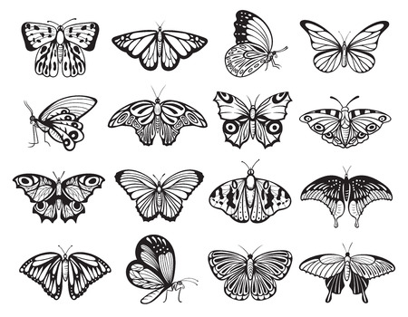 Butterfly silhouette set, wildlife ornament of nature decoration. Nectar feeding insect with two pairs of large wings. Vector line art illustration