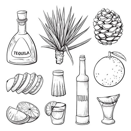 Tequila ingredients hand drawn monochrome illustrations set Ilustração