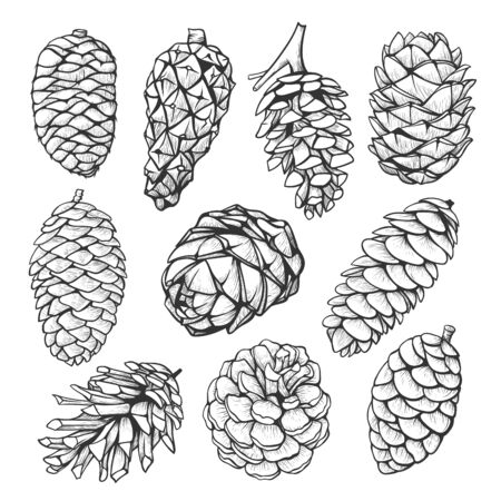 Fir pine cone hand drawn illustrations set