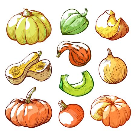 Sliced and whole pumpkins hand drawn vector illustrations set