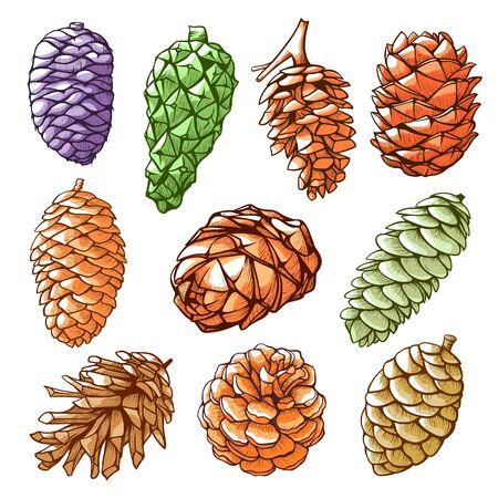 Pine cones hand drawn vector color illustrations collection Vektorové ilustrace