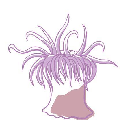 Sea anemone icon, ocean fauna, aquatic life. Group of marine, predatory animals image. Vector flat style cartoon illustration isolated on white background