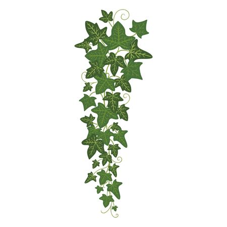 Ivy branch icon, greenery home decoration and design 矢量图像