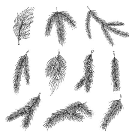 Fir tree branches hand drawn illustrations set. Pine, spruce. Christmas tree sketch pack. Winter plants for X-mas decoration isolated on white background. Botanical design elements collection