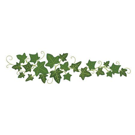 Efeu-Zweig-Symbol, Gründekoration und Pflanzenornament. Vector flache Artkarikaturillustration lokalisiert auf weißem Hintergrund